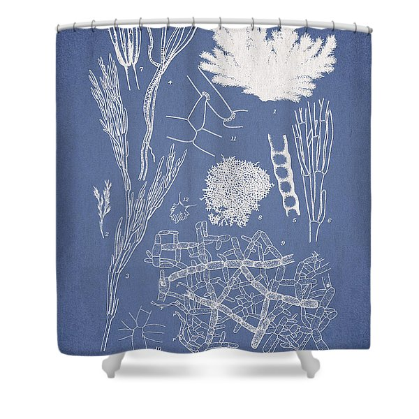 Microdyctyon and Cladophora Shower Curtain by Aged Pixel