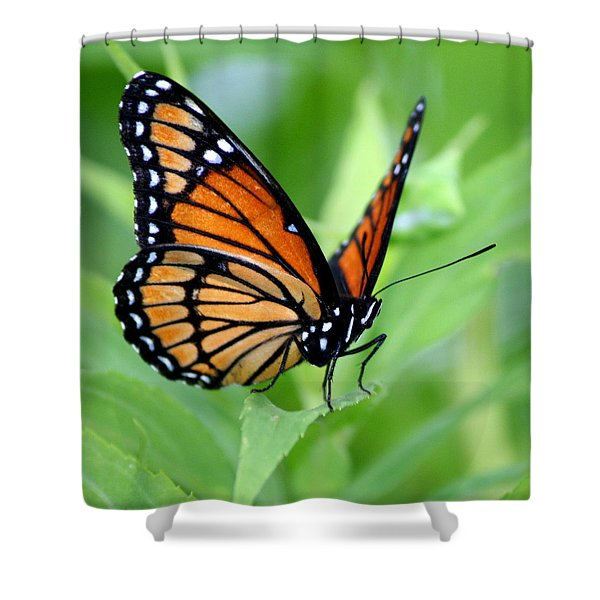 Monarch Dreaming Shower Curtain by Neal  Eslinger