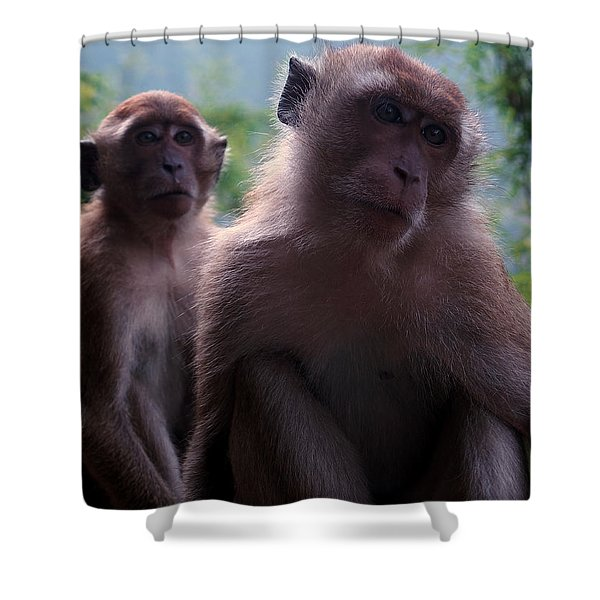 Monkey's Attention Shower Curtain by Justin Woodhouse