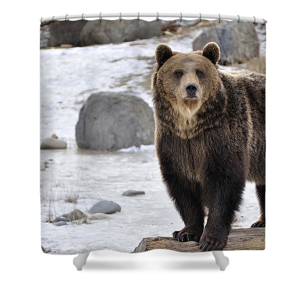Montana Grizzly  Shower Curtain by Fran Riley