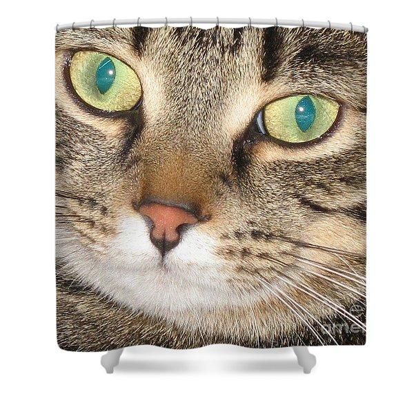 Monty The Cat Shower Curtain by Jolanta Anna Karolska
