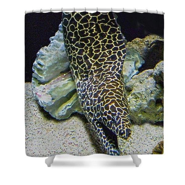 Moray Eel Shower Curtain by Sandi OReilly