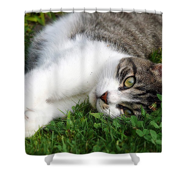 Morning Stretch Shower Curtain by Christina Rollo