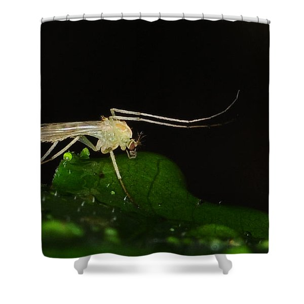 Mosquito Shower Curtain by Paul Ward