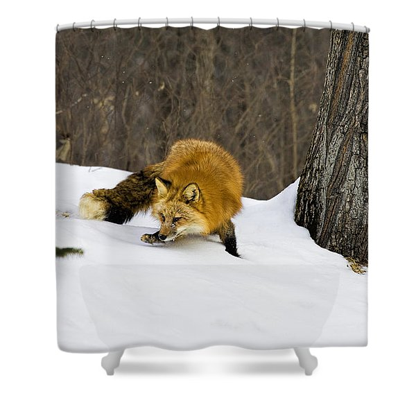 Mousing Shower Curtain by Jack Milchanowski
