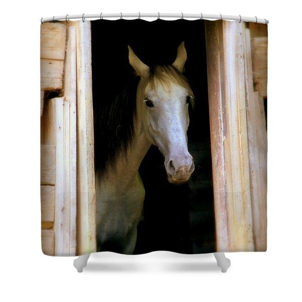 MRS. ED Shower Curtain by KAREN WILES