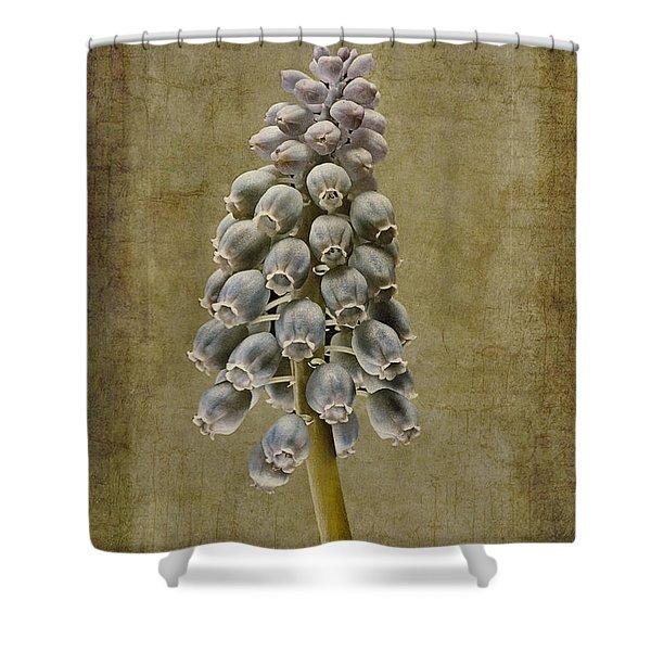 Muscari armeniacum with textures Shower Curtain by John Edwards