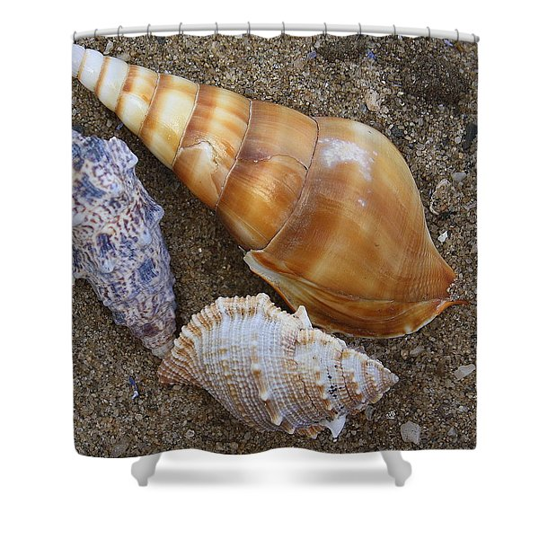 My Seashells Shower Curtain by  Photographic Art and Design by Dora Sofia Caputo