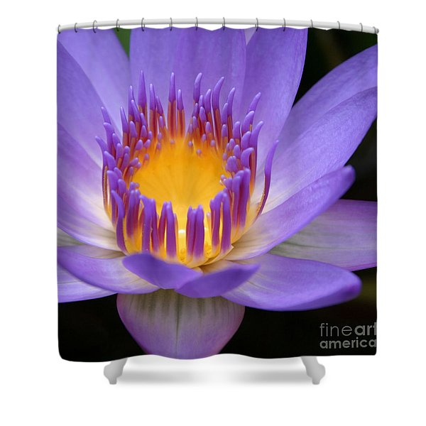 My Soul Dressed In Silence Shower Curtain by Sharon Mau