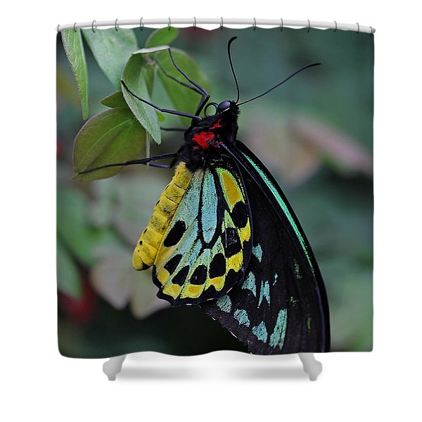 Natural Awakenings Shower Curtain by Juergen Roth