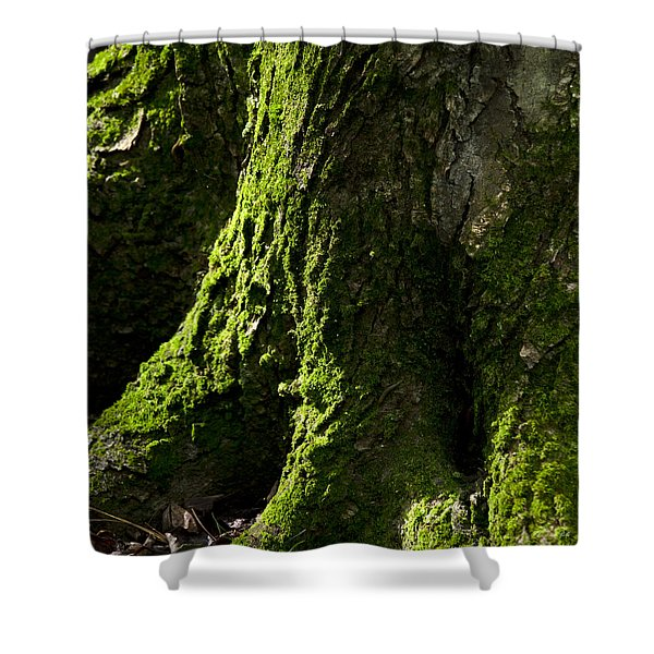 Nature Abstract Tree Trunk Shower Curtain by Christina Rollo