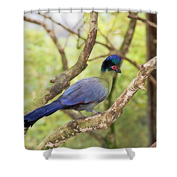 Natures Beauty Shower Curtain by Aimee L Maher Photography and Art