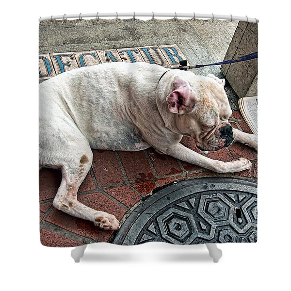 Newsworthy Dog In French Quarter Shower Curtain by Kathleen K Parker