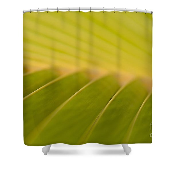 'O ke aka ka 'oukou Shower Curtain by Sharon Mau