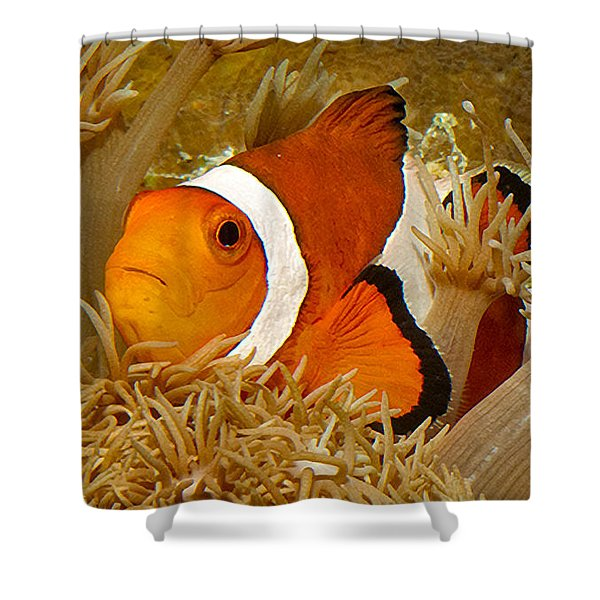 Ocellaris Clown Fish No 1 Shower Curtain by Jerry Fornarotto