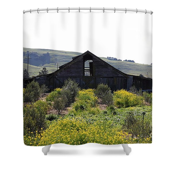 Old Barn in Sonoma California 5D22235 Shower Curtain by Wingsdomain Art and Photography