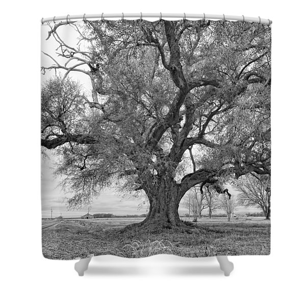 On the Delta monochrome Shower Curtain by Steve Harrington