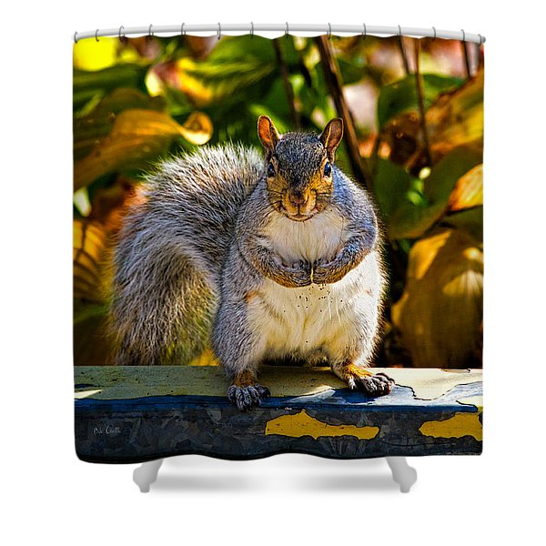 One Gray Squirrel Shower Curtain by Bob Orsillo