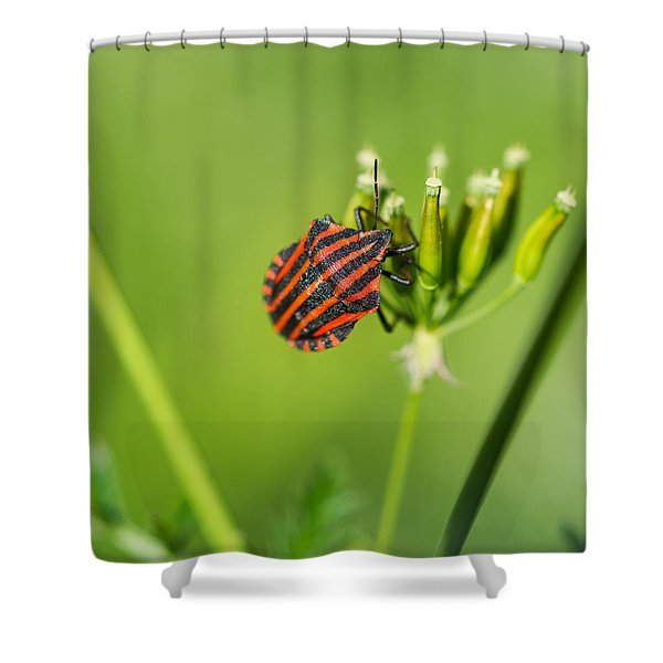 One More Bottle Doesn't Hurt - Square - Featured 3 Shower Curtain by Alexander Senin