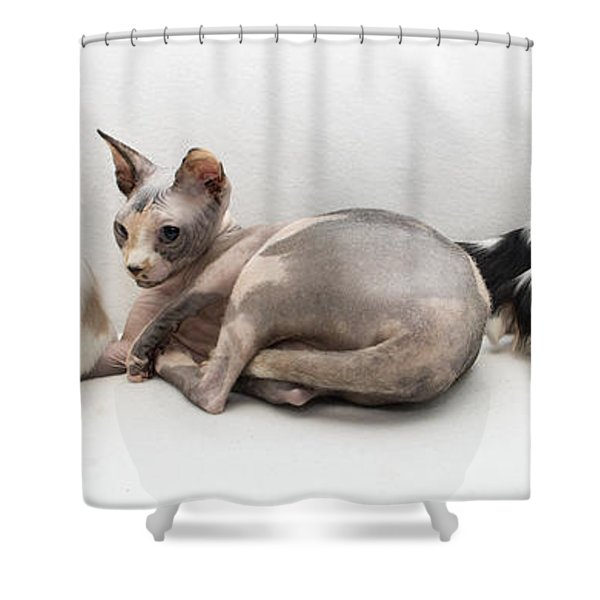 One Of These Is Not Like The Others Shower Curtain by Jeannette Hunt