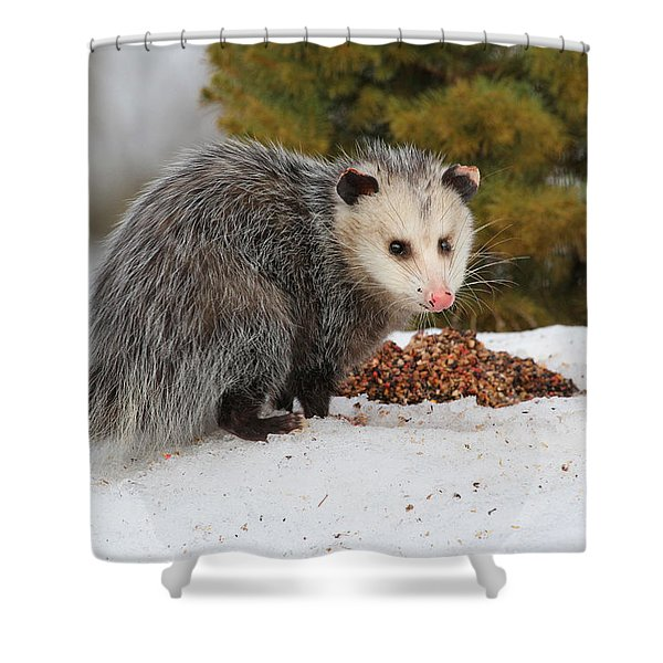 Opossum Shower Curtain by Karol  Livote