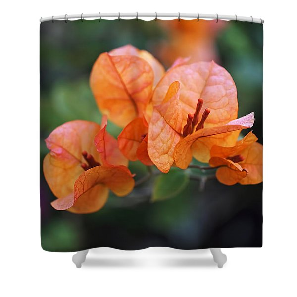 Orange Bougainvillea Shower Curtain by Rona Black