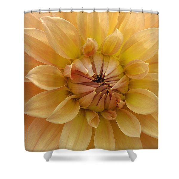 Orange Dahlia Closeup Shower Curtain by Matthias Hauser