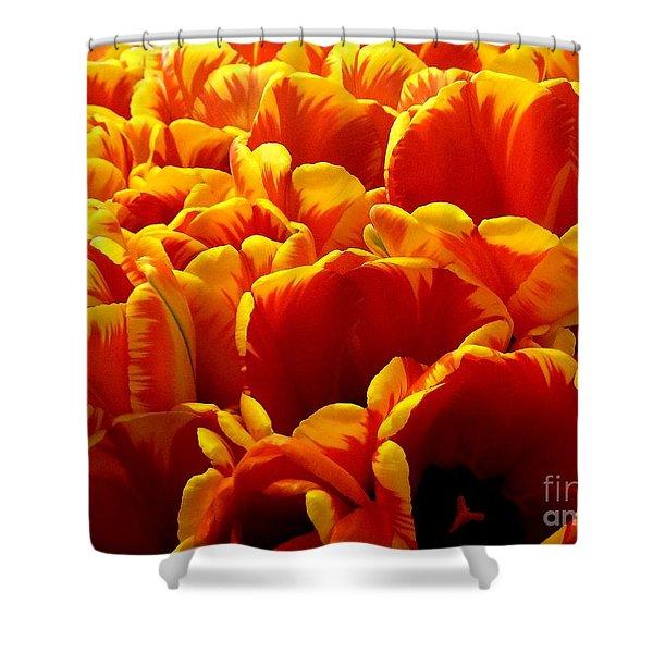 Orange Sea Shower Curtain by Lauren Hunter
