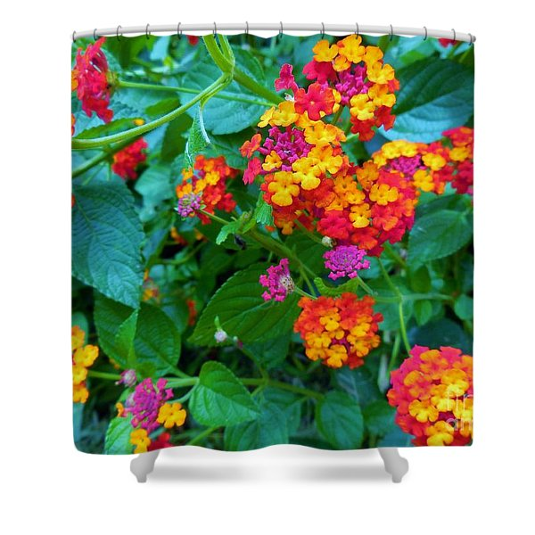 Orange... Yellow... Mauve... And Red Shower Curtain by Eloise Schneider