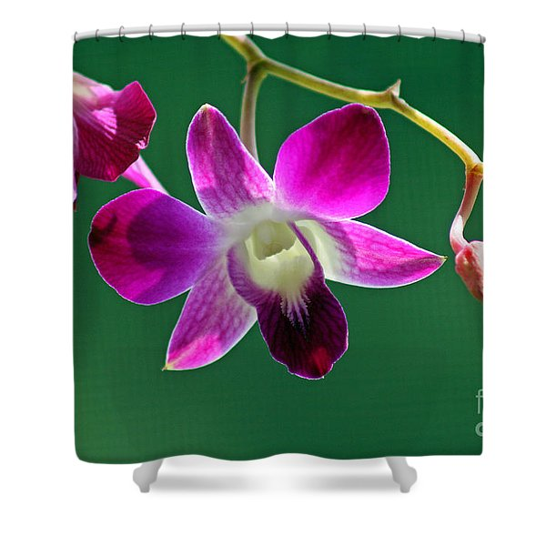 Orchid Flower Shower Curtain by Karen Adams