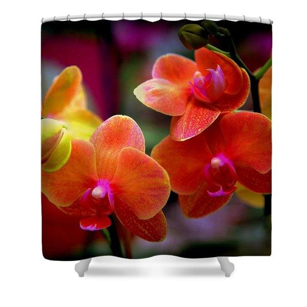 Orchid Melody Shower Curtain by Karen Wiles