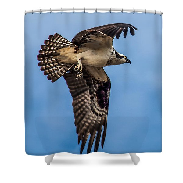 Osprey Flying Away Shower Curtain by Robert Bales