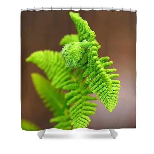 Ostrich Fern Shower Curtain by Christina Rollo