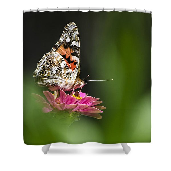 Painted Lady Butterfly At Rest Shower Curtain by Christina Rollo