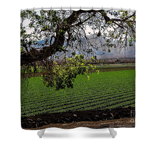 Panoramic of Winter Lettuce Shower Curtain by Robert Bales