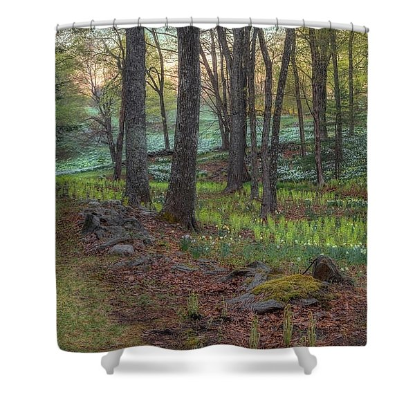 Path to the Daffodils Shower Curtain by Bill  Wakeley