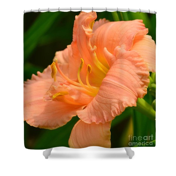 Peach Day Lilly Shower Curtain by Kathleen Struckle