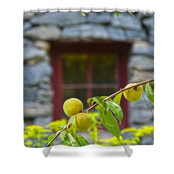 Peach Tree At The Old Mill Of Guilford Shower Curtain by Sandi OReilly