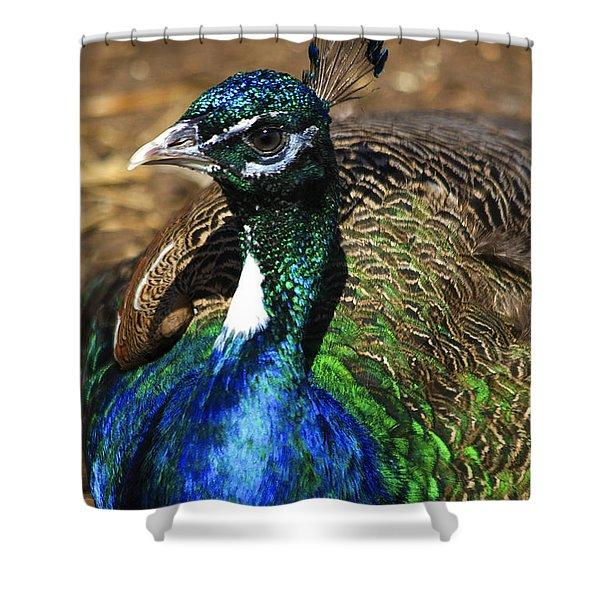 Peacock Blue Shower Curtain by Deborah Benoit