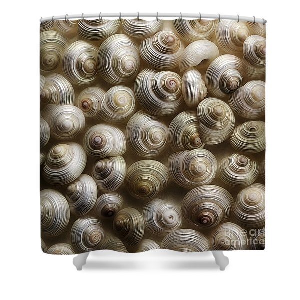 pearly Shower Curtain by Priska Wettstein