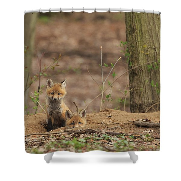 Peeking From The Fox Hole Shower Curtain by Everet Regal