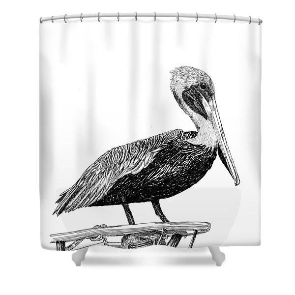 Pelican of Monterey Shower Curtain by Jack Pumphrey