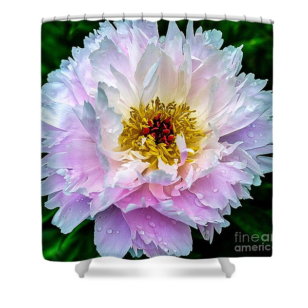 Peony Flower Shower Curtain by Edward Fielding