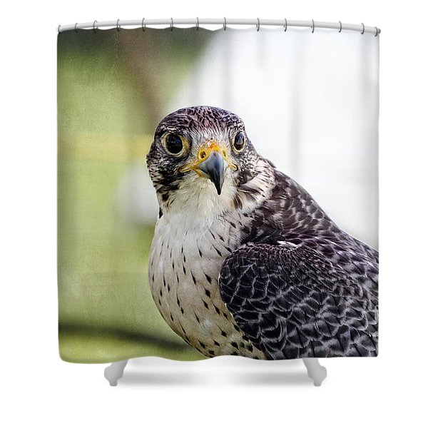 Peregrine Falcon Bird Of Prey Shower Curtain by Eleanor Abramson