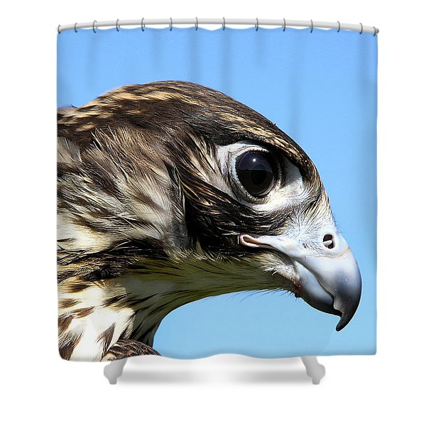 Peregrine Falcon Tashunka Shower Curtain by Christina Rollo