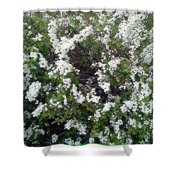 Perfect White Spring Blossoms Shower Curtain by PainterArtist FIN