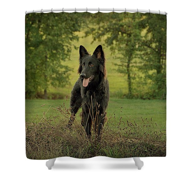 Phoenix - Early Evening Shower Curtain by Sandy Keeton