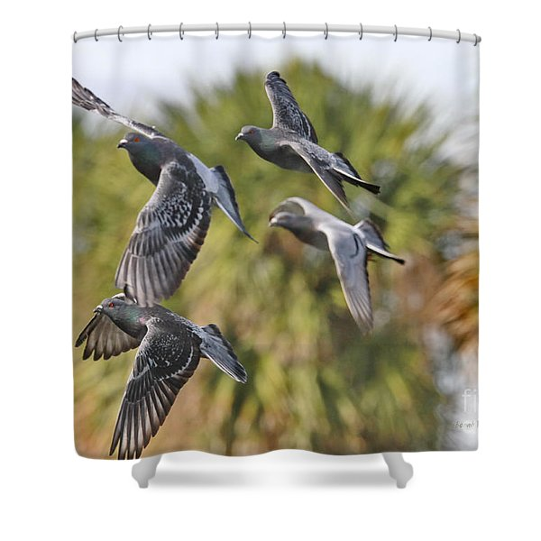 Pigeon Brigade Shower Curtain by Deborah Benoit