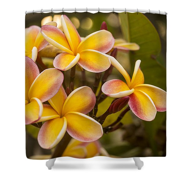 Pink and Yellow Plumeria 2 Shower Curtain by Brian Harig