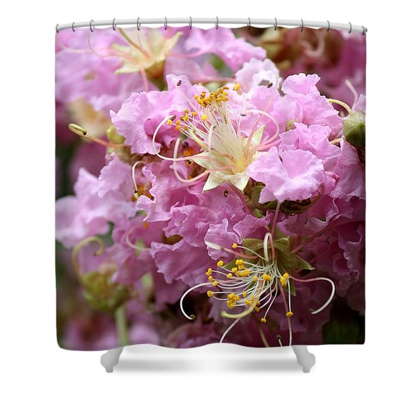 Pink Crepe Myrtle Closeup Shower Curtain by Carol Groenen